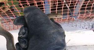 Δοκίμι Αγρινίου: Διάσωση Σαπίτη από αυλή σπιτιού (Video)