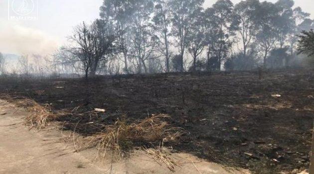 Υπό μερικό έλεγχο η πυρκαγιά στον Προφήτη Ηλία – Στάχτη 20 στρέμματα (Video – Photos)