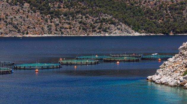 Οικονομική ενίσχυση 25 εκατ. ευρώ στους υδατοκαλλιεργητές