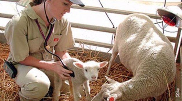 Πρόσληψη κτηνιάτρων στην Ένωση Αγρινίου