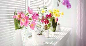 10 λόγοι για να έχετε φυτά και λουλούδια στο σπίτι…