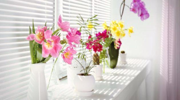 10 λόγοι για να έχετε φυτά και λουλούδια στο σπίτι σας