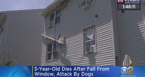 Φρικτός θάνατος για 3χρονο: Έπεσε από παράθυρο και τον κατασπάραξαν…