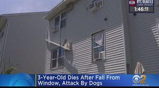 Φρικτός θάνατος για 3χρονο: Έπεσε από παράθυρο και τον κατασπάραξαν σκυλιά
