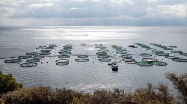 Η Ε.Ε. κρατά το κλειδί για την ανάπτυξη της υδατοκαλλιέργειας