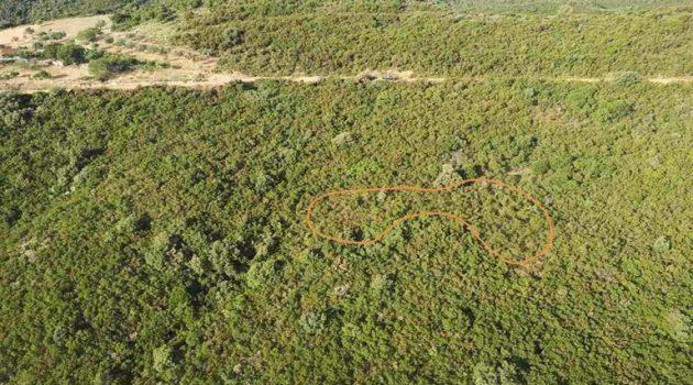 Ναυπακτία: Εξαρθρώθηκε το κύκλωμα καλλιέργειας δενδρυλλίων κάνναβης (Photos)