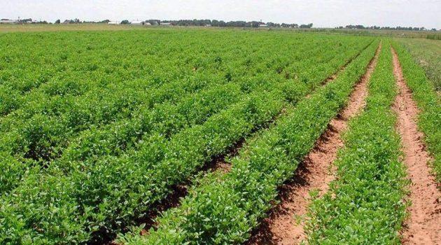 Αγροτική Ανάπτυξη: 21,3 δισ. ευρώ για τον εκσυγχρονισμό της ελληνικής γεωργίας