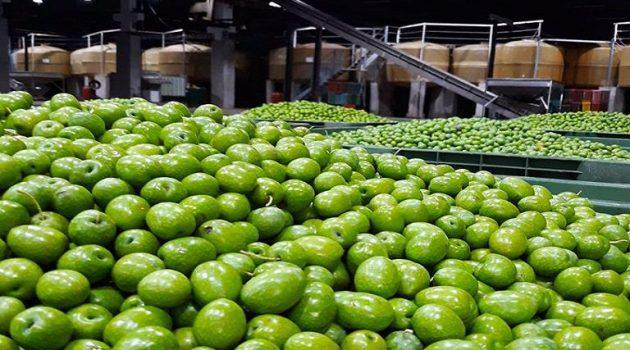 Επιτραπέζια ελιά: Ομαλοποιείται η αγορά