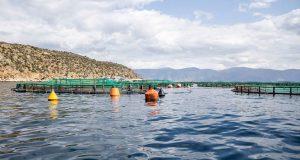ΕΛ.Ο.Π.Υ.: Δύο νέα ερευνητικά έργα για το περιβάλλον σε συνεργασία…