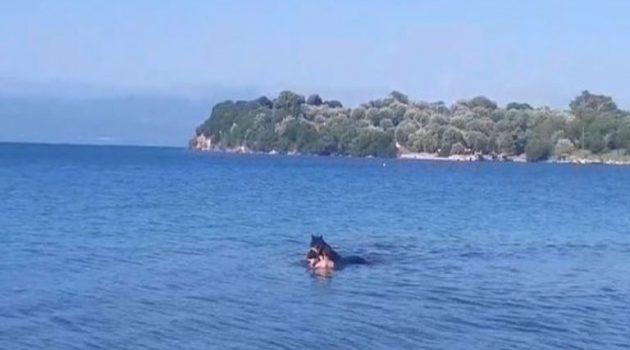 Μέρες καύσωνα στην Κατούνα κι έβαλαν τα άλογα να δροσιστούν στη θάλασσα (Video)