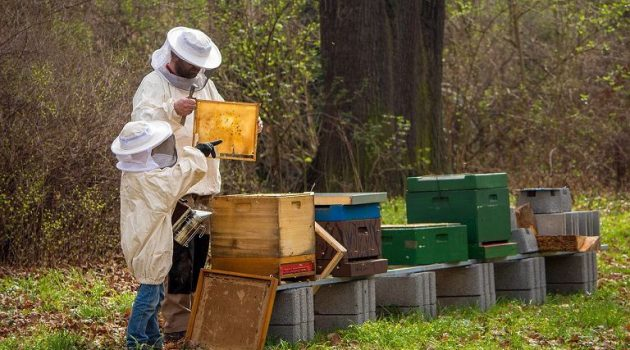 Εγκρίθηκε η κορωνοενίσχυση χοιροτρόφων και μελισσοκόμων