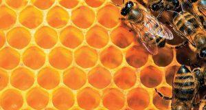 Διπλασιάζεται στα 12,32 εκατ. ο προϋπολογισμός του Εθνικού Μελισσοκομικού Προγράμματος