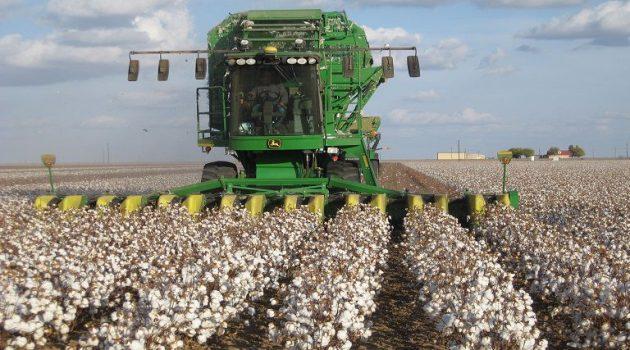Αύξηση κατανάλωσης και εξαγωγών φέρνει μείωση αποθεμάτων βάμβακος