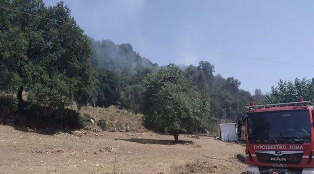 Χρυσοβίτσα Θέρμου: Πυρκαγιά στη θέση Διάσελο (Photos)