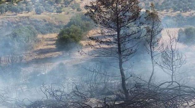 Πυρκαγιά κοντά στην Αγία Άννα Γούμερου Ηλείας – Τραυματίστηκε Αστυνομικός (Video)