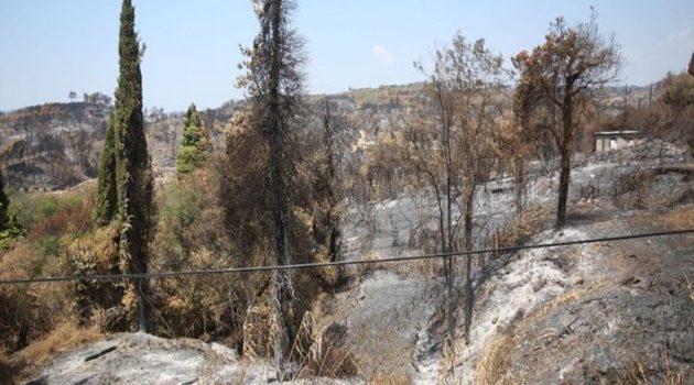 Στέλιος Πέτσας: «Aποζημιώσεις στους πυρόπληκτους από τις 18 Αυγούστου»