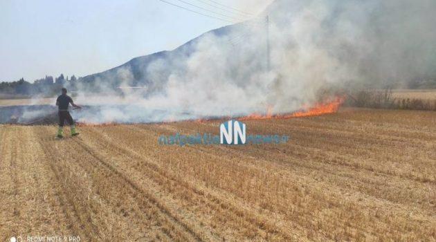 Πυρκαγιά σε αγροτική έκταση στα Κωστέικα στην Κάτω Βασιλική (Video)