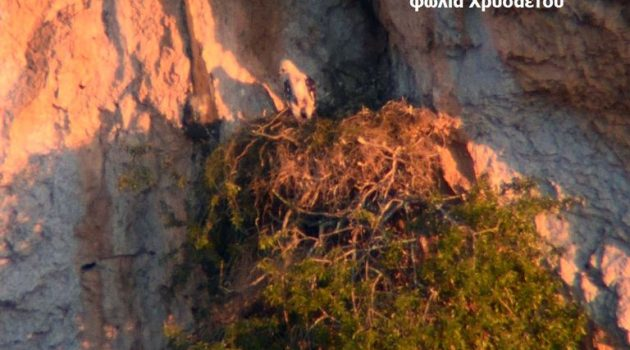 Παρακολούθηση πληθυσμών Όρνεων σε Αράκυνθο, Ακαρνανικά και Εμπεσό (Photos)