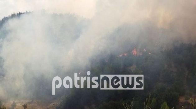 Φωτιά στην Ηλεία: Φουντώνουν ξανά οι φλόγες – Απειλούν να περάσουν και στην Αρκαδία (Video)