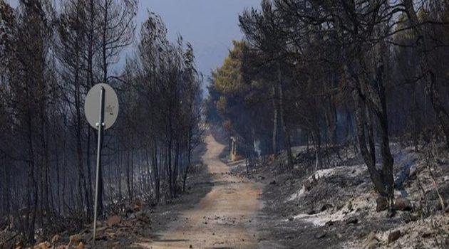Φωτιά στα Βίλια: Πάνω από 94.000 στρέμματα η καμένη γη