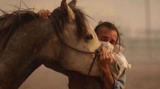 Φωτιά στη Βαρυμπόμπη: Τεράστια κινητοποίηση για τη διάσωση των ζώων (Photos)