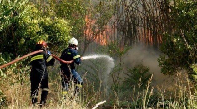 Πυρκαγιά σε δασική έκταση στη Νυμφαία