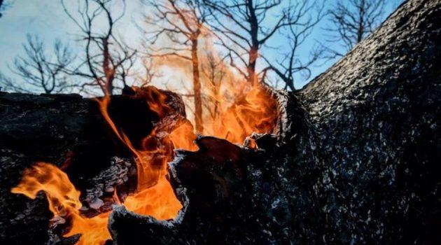 Φωτιά στη Λακωνία: Μαίνεται το μέτωπο στην Ανατολική Μάνη