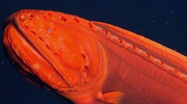 Καλιφόρνια: Βρέθηκε σπάνιο ψάρι που αλλάζει μορφή (Photo)