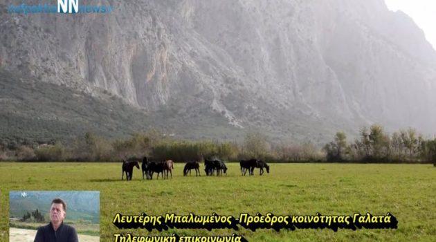 Ναυπακτία: Σοβαρό ατύχημα με τα άγρια άλογα του Γαλατά (Video)