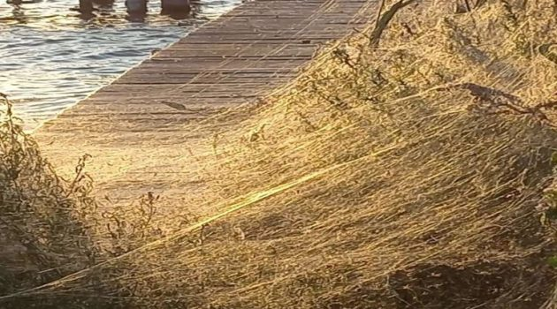 Εμφανίστηκαν πάλι οι αράχνες στο Αιτωλικό (Photos)