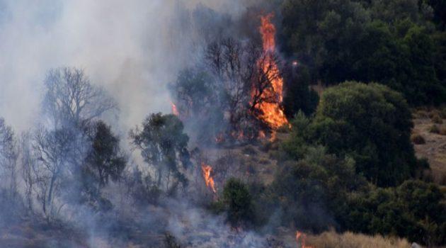 Φωτιά ξέσπασε πριν από λίγο στην Πάρνηθα