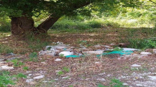 Εθελοντική Δράση Καθαρισμού στη Λίμνη Τριχωνίδα (Photos)
