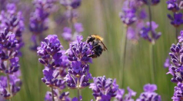 Πρωτοβουλία για την προστασία μελισσών και αγροτών