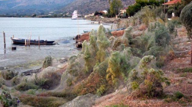 Αιτωλικό: Άρχισε να εμφανίζεται και πάλι το φαινόμενο της αράχνης (Video – Photos)