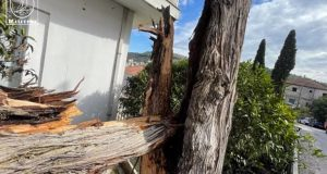 Κυπαρίσσι έπεσε από τους ανέμους στον Άγιο Αθανάσιο Αμφιλοχίας (Video)