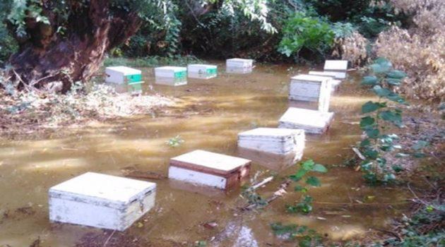Ακόμα και μελίσσια έπνιξε η έντονη βροχή στο Λεσίνι (Photos)
