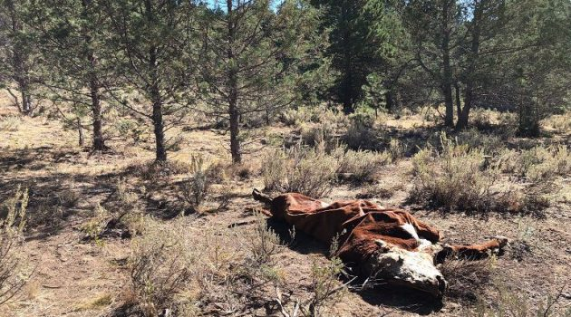 Αγρίνιο: Παρουσίαση του προγράμματος περισυλλογής νεκρών παραγωγικών ζώων