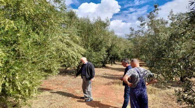 Σταμνά: Μεγάλες καταστροφές σε ελαιόδεντρα εξαιτίας της χαλαζόπτωσης (Photos)