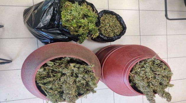 Ηλεία: Συνελήφθη για καλλιέργεια, κατοχή ναρκωτικών και παράνομη οπλοκατοχή (Photos)
